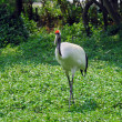 Crane with green grass — Stock Photo