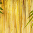 Light golden bamboo Background — Stock Photo
