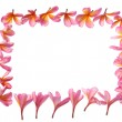Tropical flower frame — Stock Photo