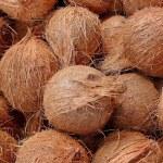 Coconuts — Stock Photo #2042252