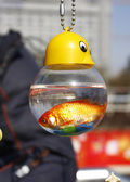 Small gold fish in bottle from water — Stock Photo