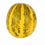 Decorative gourd — Stock Photo