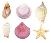 Collection of seashells — Foto de Stock
