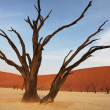 Namib desert — Stock Photo #2048886