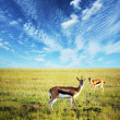 Antelope — Stock Photo #2074017
