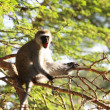 Monkey — Stock Photo #2074336