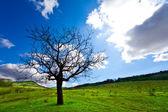 Alone tree — Стоковое фото