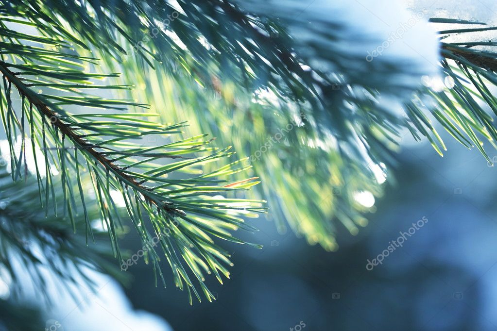 Winter forest — Stock Photo #2103372