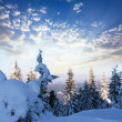 Winter — Stock Photo #2113757