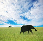 Elephant — Fotografia Stock