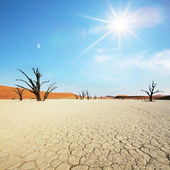 Namib — Stock Photo