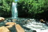 Waterfall in jungle — Stock Photo
