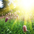 Meadow — Stock Photo #2165009