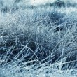 Stock Photo: Wet grassland