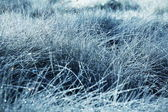 Wet grassland — Stock Photo