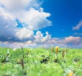 Prato primavera — Foto Stock