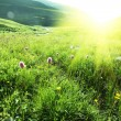 Sunny meadow - Stock Photo