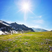 Mountain meadow — Stock Photo