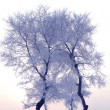 Tree in winter in a north island — Stock Photo #2090258