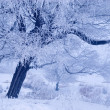 Tree in winter in a north island — Stock Photo