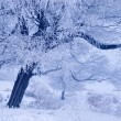Tree in winter in a north island — Stock Photo #2090303