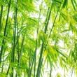 Verdure flourish bamboo background — Stock Photo