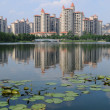 Stock Photo: Shanghai city Park