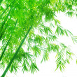 Green flourish bamboo foliage — Stock Photo