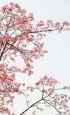 Magnolia trees — Stock Photo