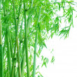 Verdure bamboo grove background — Stock Photo