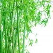 Verdure bamboo grove background — Foto Stock