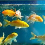 Das aquarium — Stockfoto