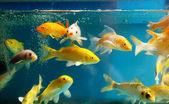 Het aquarium — Stockfoto