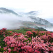 Spring misty mountain peach flowers — Stockfoto