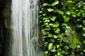 Waterfall rockery with climbing plant — Stock Photo