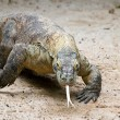 Charging Komodo — Stock Photo #2114129