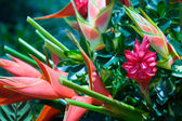Heliconia Bouquet — Stock Photo