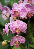 Purple Orchid Strand — Stock Photo