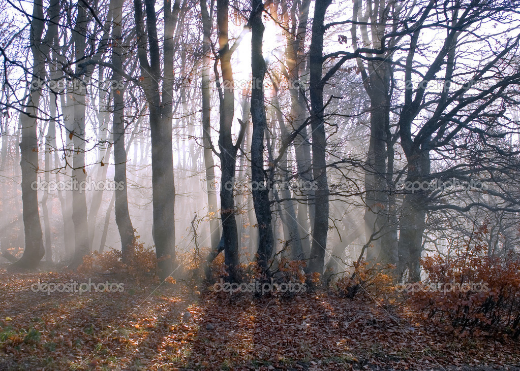 Solar beams through branches and foggy — Stock Photo #2073693