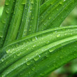 Rain drops on green leaves - Stock Photo