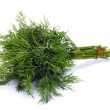 Green fennel leaf - Stockfoto