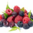 Red and black raspberry with leaves — Stock Photo
