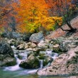 Autumn tree near the river — Stock Photo #2148362
