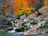 Autumn tree near the river — Stock Photo