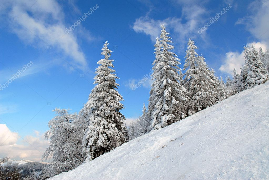 Panorama of the winter forest of Carpathians  Stock Photo #2147726