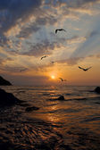 Seagulls fly against a rising sun — Stock Photo