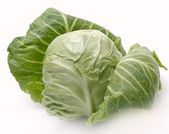 Cabbage on a white background — Stock Photo