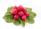 Bunch of a garden radish with leaves — Stock Photo