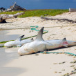 Two dead sharks on sandy coast — Stock Photo