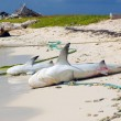 Stock Photo: Two dead sharks on sandy coast